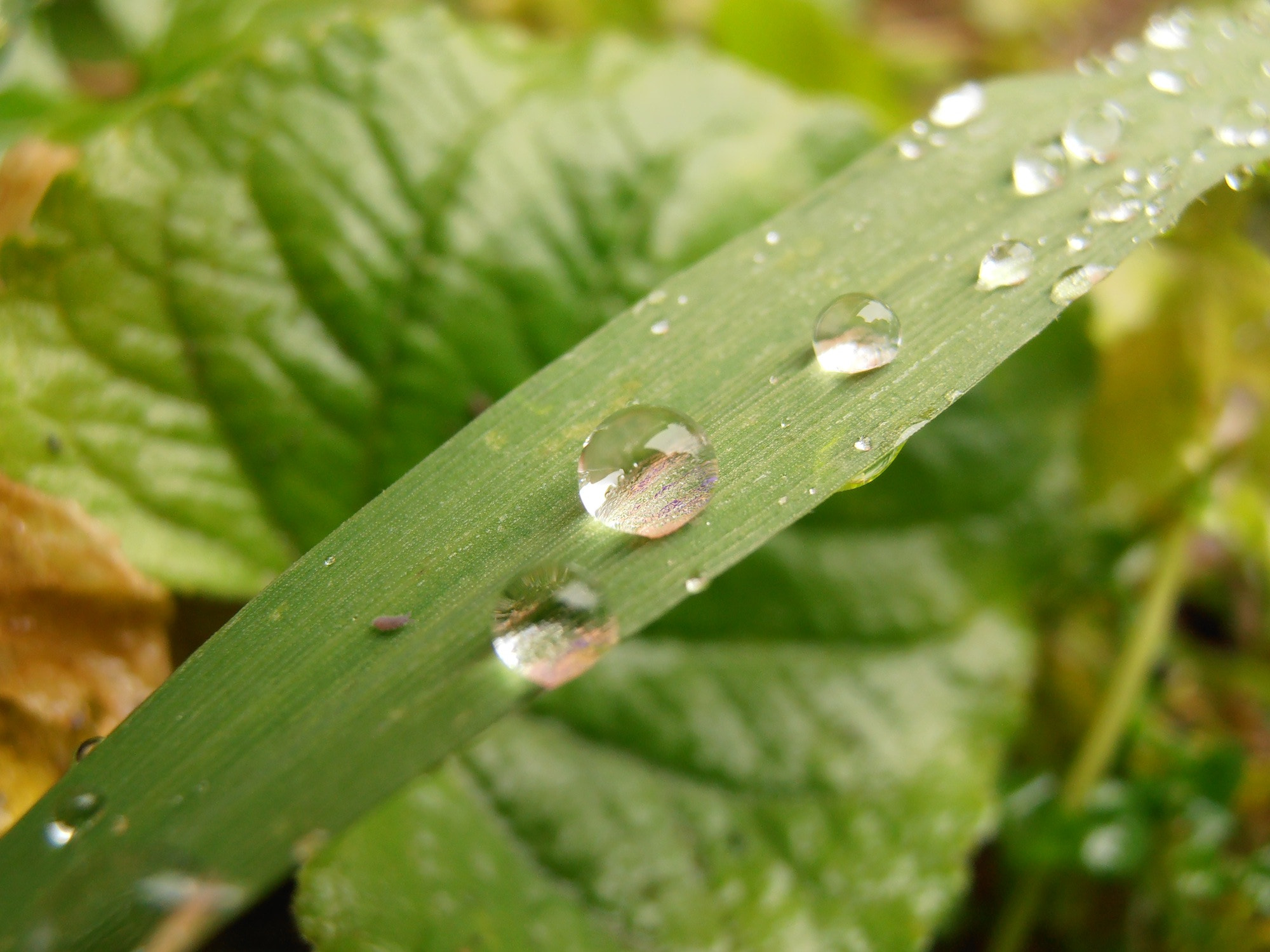 Photograph Droplets bladed by Matthew Lakeland on 500px