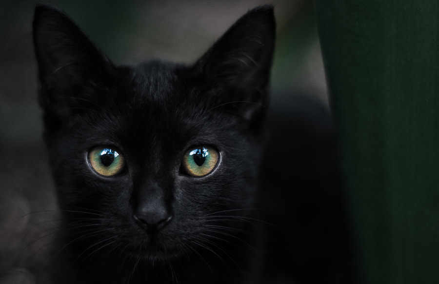 eye / black cat by Zachary Voo on 500px.com