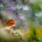Постер, плакат: Somewhere in the Enchanted Forest Macro Ambience