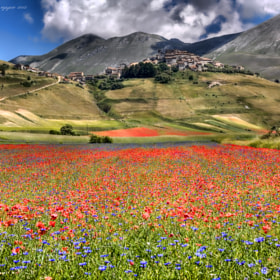 Bloom ☼ by Giuseppe  Peppoloni (giuseppepeppoloni)) on 500px.com