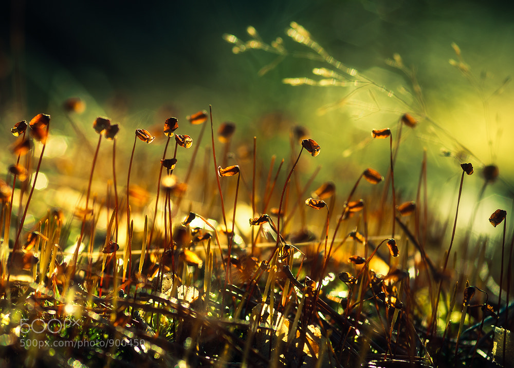 Photograph From The Forest Floor by Joni Niemelä on 500px