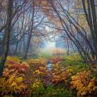 Misty forest. Trondheim, oct 2013.