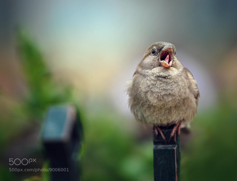 Photograph LALAAALAAAAA!!!! by eric c. on 500px