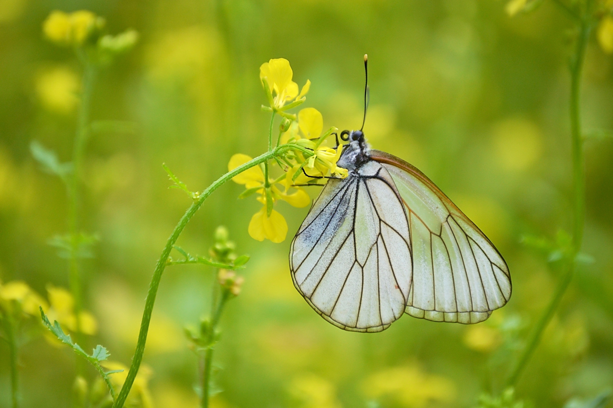Photograph Butterfly by F plusO on 500px