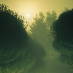 Riverside Fog by Joni Niemelä (Nitrokki)) on 500px.com