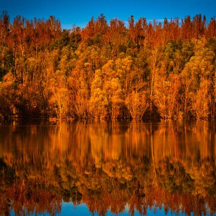 orange pond