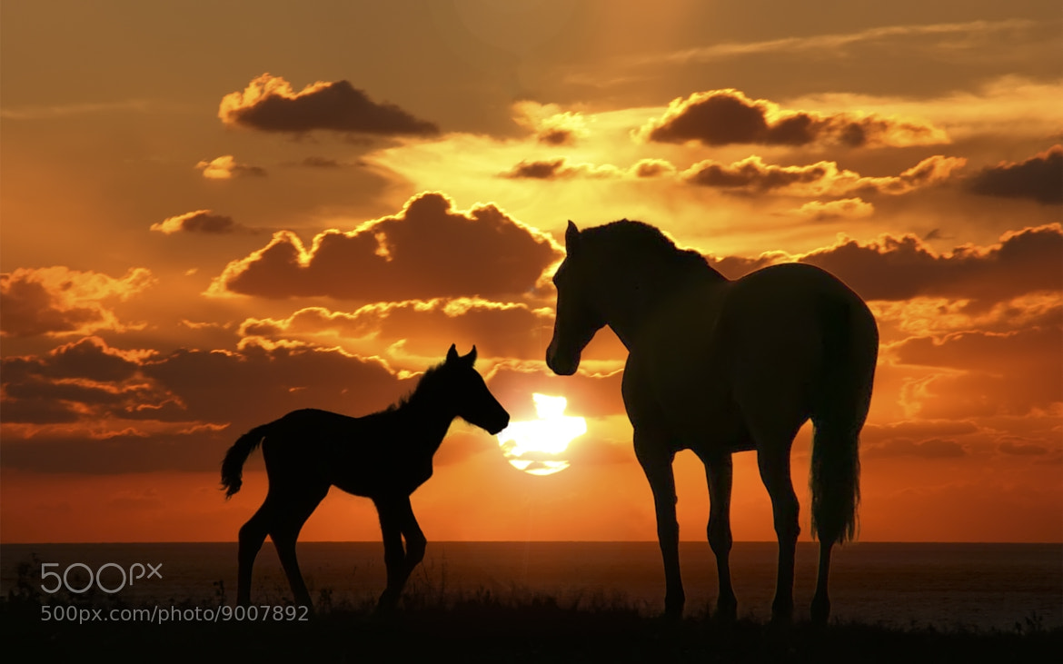 Photograph Sunset with Horse by The  Game on 500px