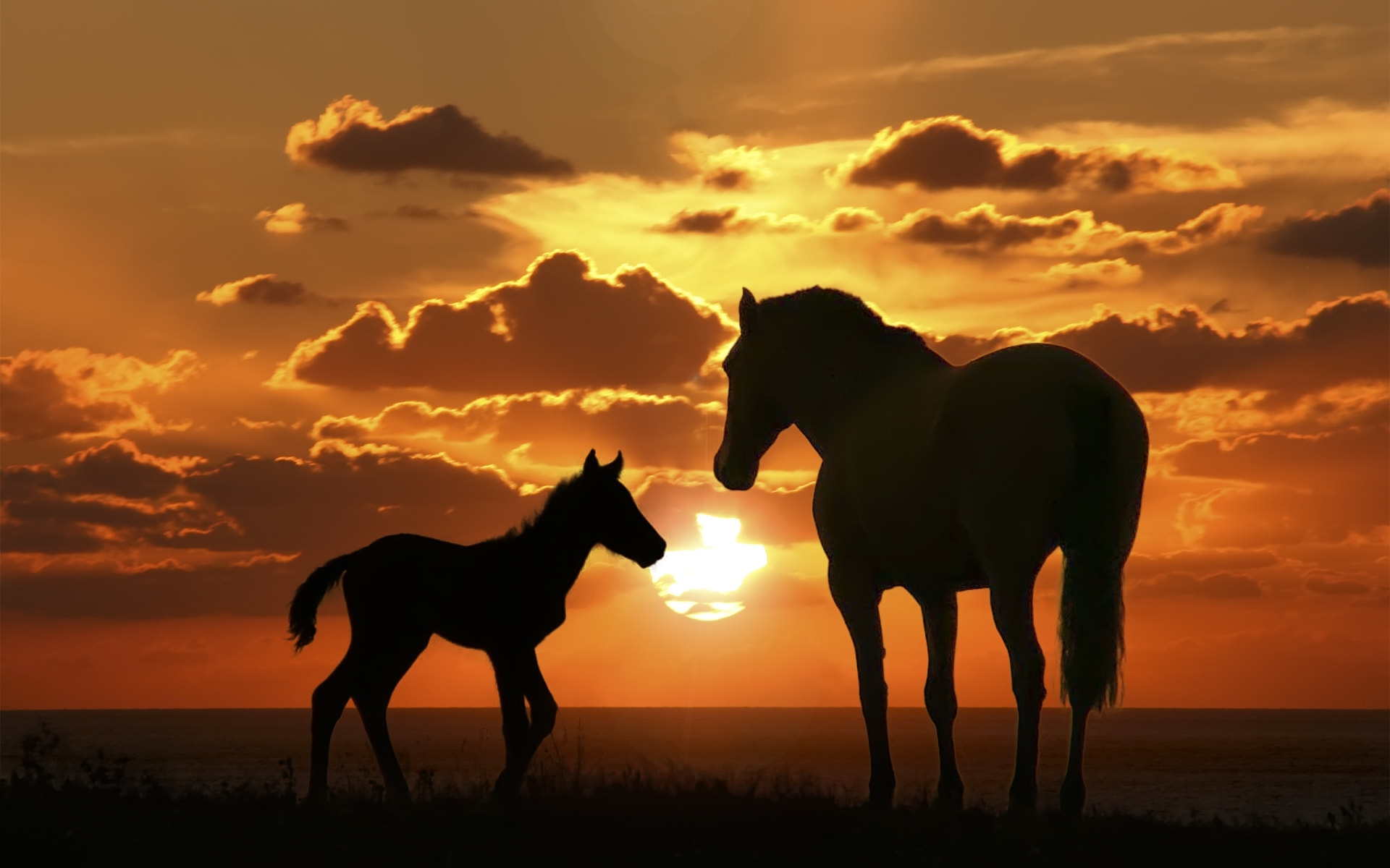Photograph Sunset with Horse by Nicolo' Morbidelli on 500px
