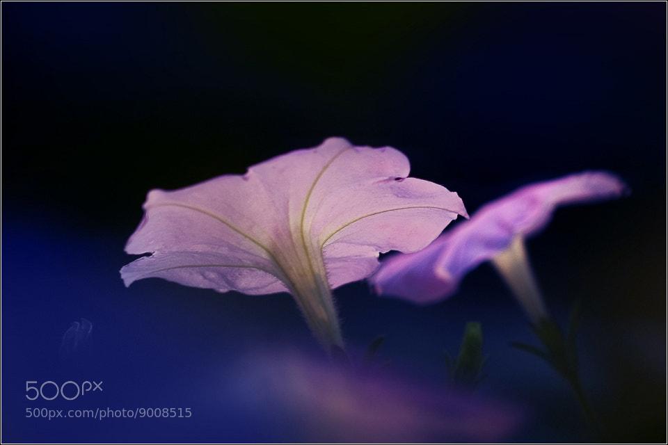 Photograph flower by Vivi Par on 500px