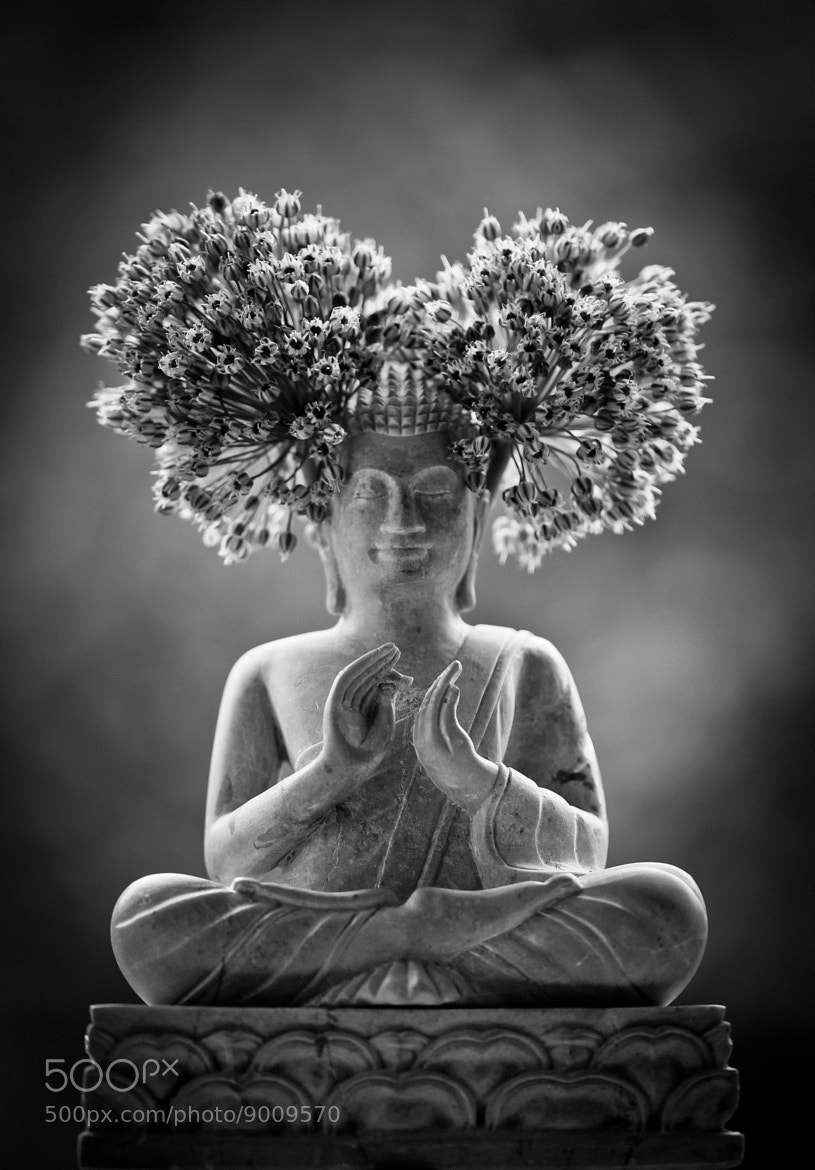 Photograph Buddha..Otherwise! by  karen Petit on 500px