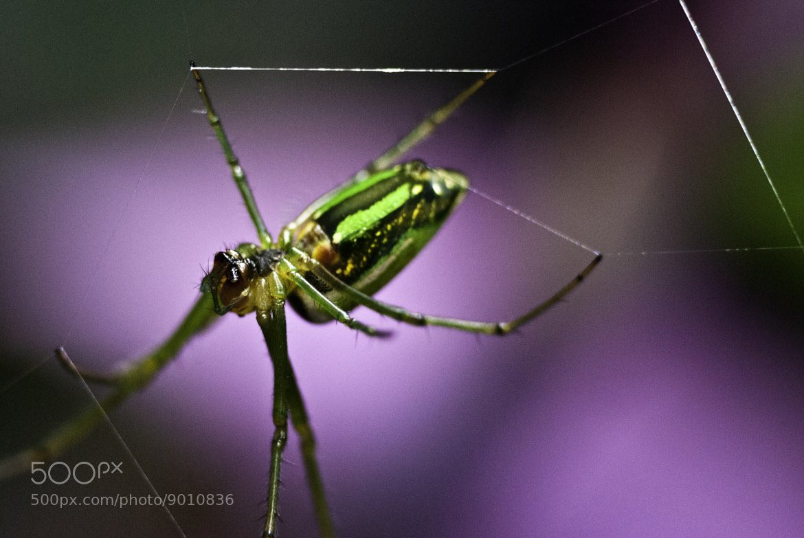 Photograph Web Spinner by Mwaniki Will on 500px