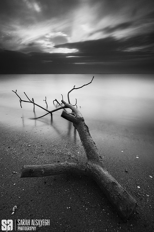 Fine Art Black and White Landscape Photography The Dead Tree Branch by landscape and nature photographer Sarah Alsayegh