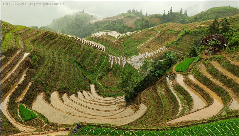 Photograph Rice terraces in China by Yevgen Timashov on 500px
