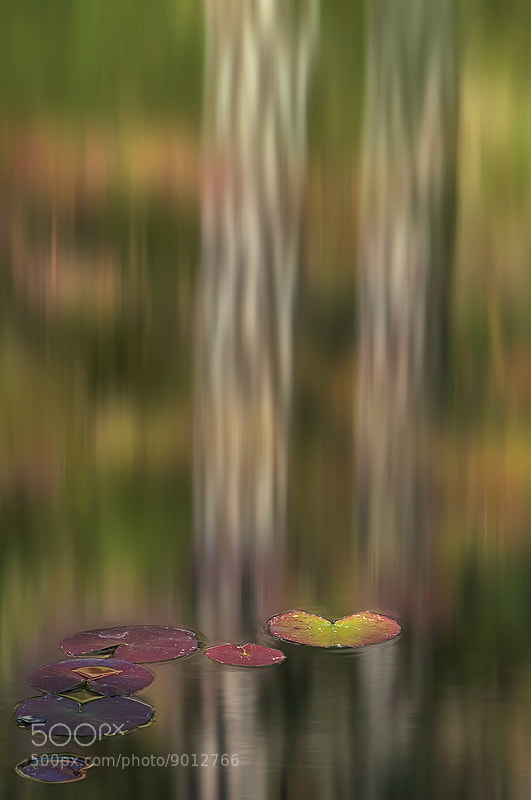 Photograph Spring's Palette by Mary Kay on 500px