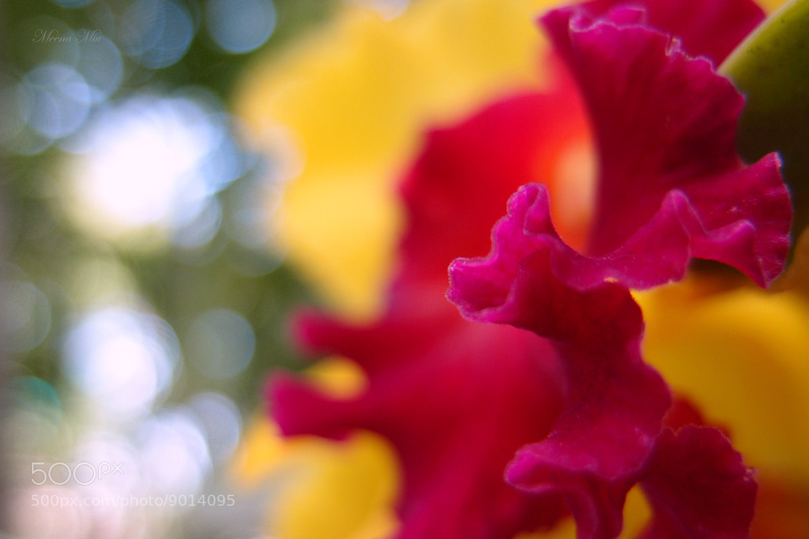 Photograph Cattleya by Everyday IsAGoodDay on 500px