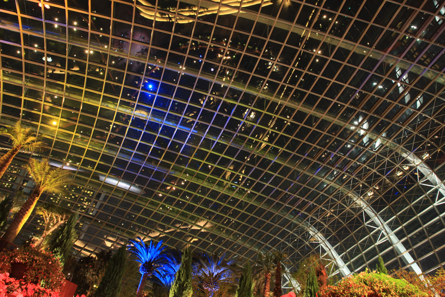 Starry Starry Night Under the Flower Dome