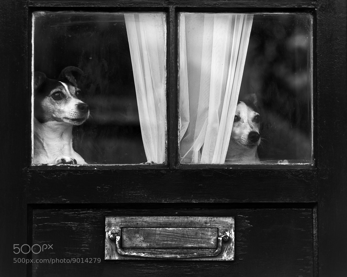 Photograph Waiting by Peter Davidson on 500px