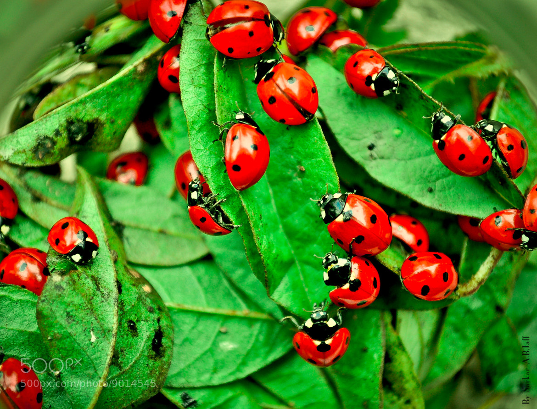 Photograph Hello Ladybugs by saro jaf on 500px