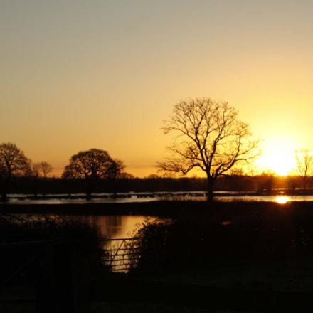 Oak Tree Cottage at dawn