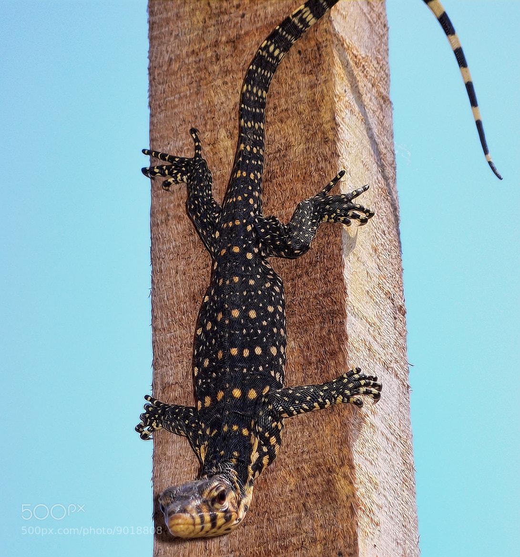 Photograph Lizard #04 by Marco cavallari on 500px