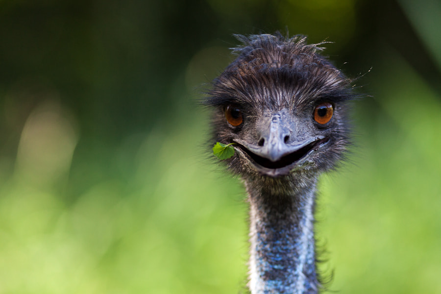 Photograph Emu by Wolfgang Wörndl on 500px
