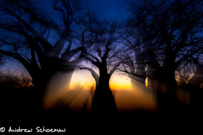 Photograph Ghostly Baobabs by Andrew Schoeman on 500px
