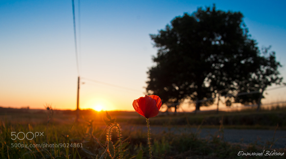 Photograph Coquelicot by Namu Bedroom on 500px