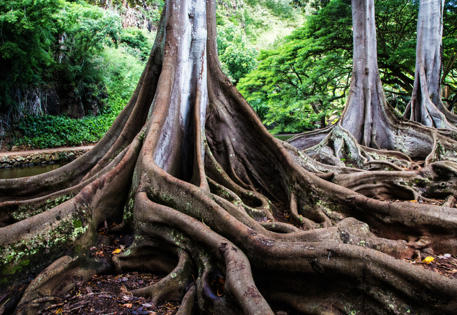 Photograph Roots by Dave Weber on 500px