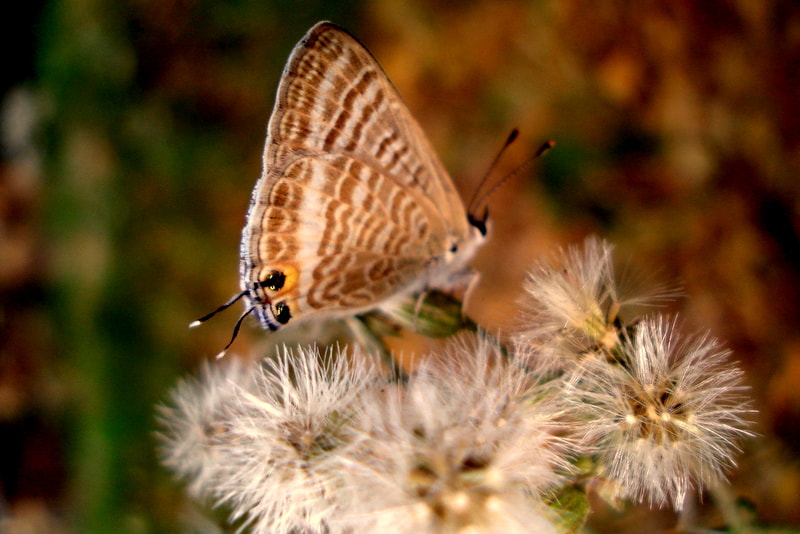 Photograph Butter fly n its beloved by naveen sharma on 500px
