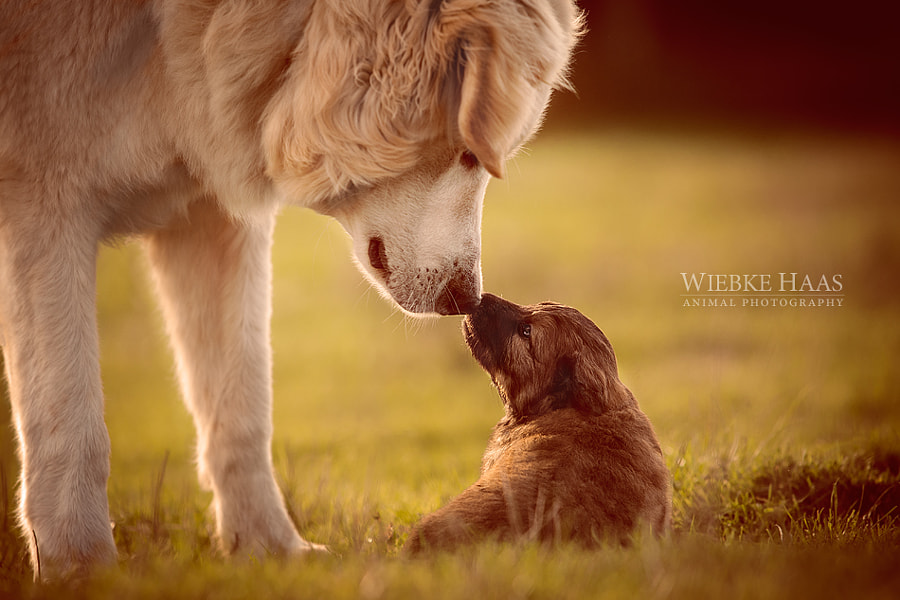 Big Brother by Wiebke Haas on 500px.com