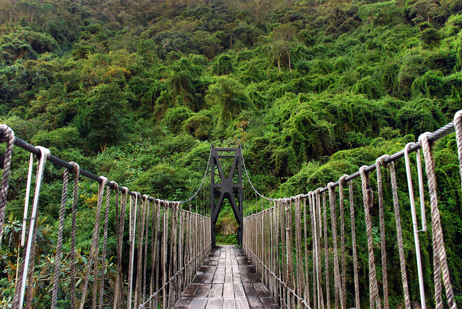 adventurous suspension bridge in the Bolivian rain forest by Thomas Heinze on 500px.com
