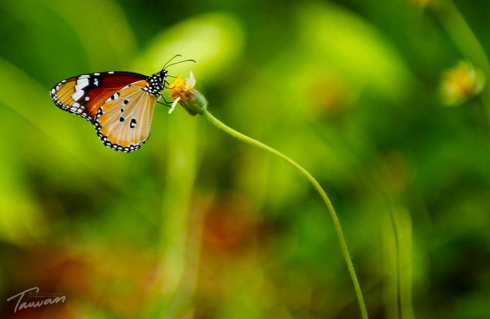 Photograph butterfly by Chalong Tawan on 500px