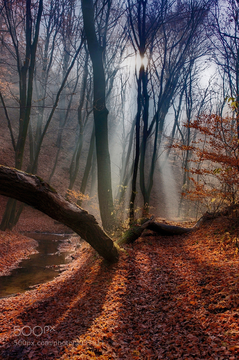 Photograph lights the path by Andy 58 on 500px