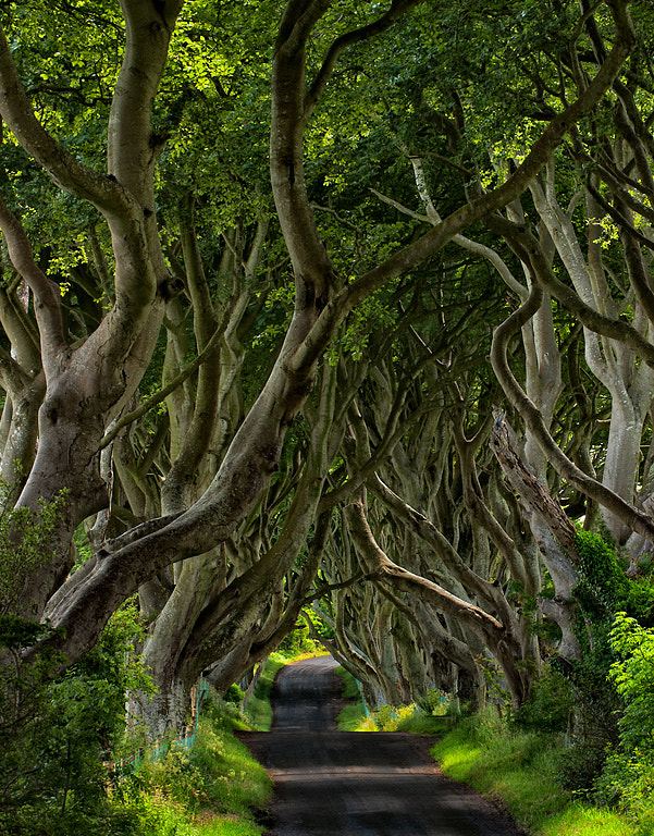 Photograph The Dark Hedges by John Barclay on 500px