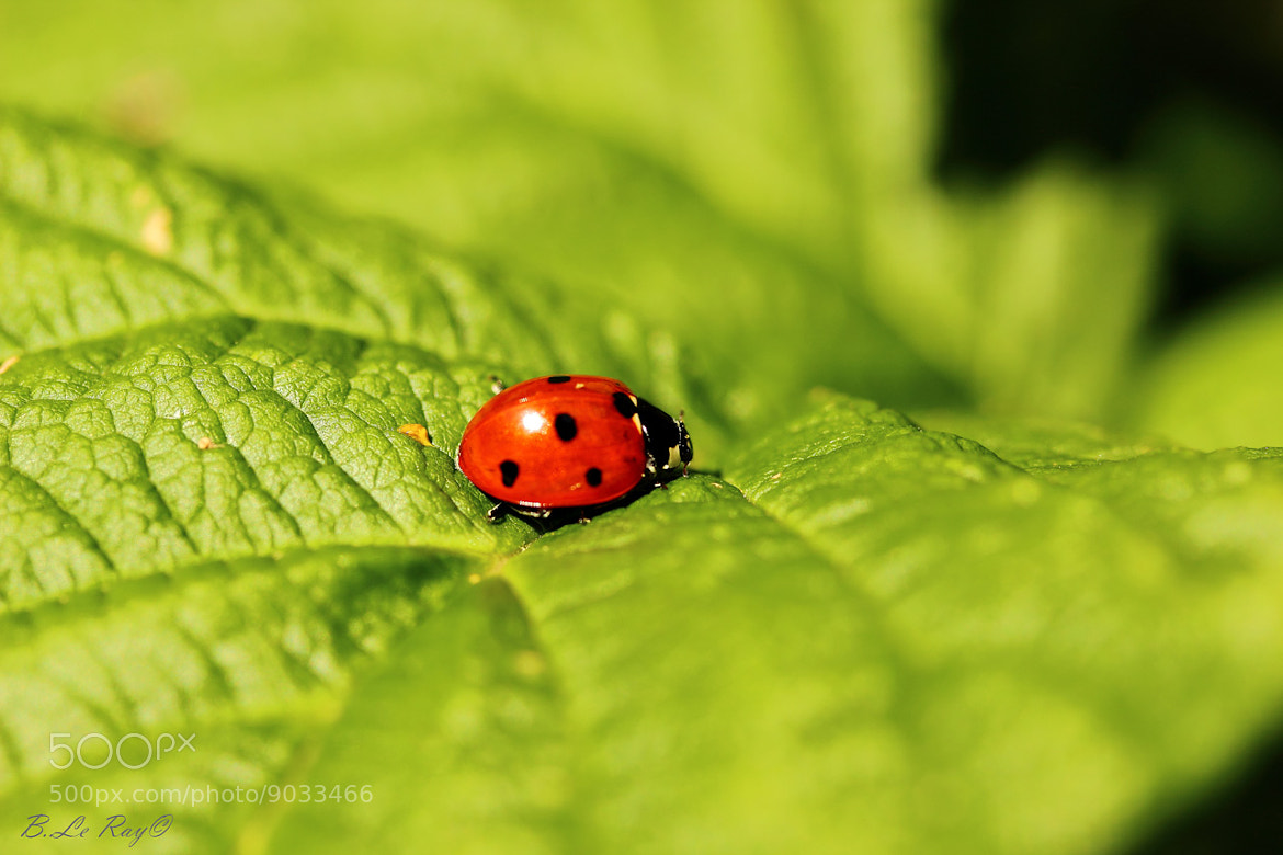 Photograph coccinelle by le ray bruno on 500px