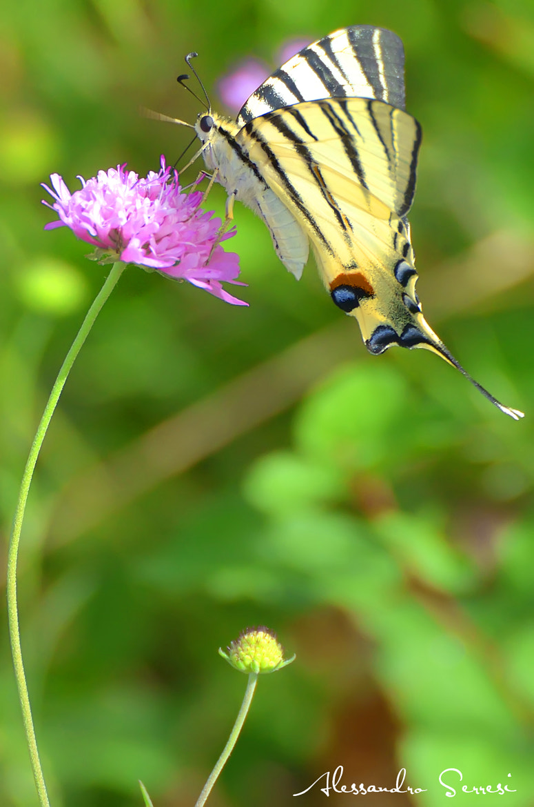 Photograph LOVE OF A BUTTERFLY by Alessandro Serresi on 500px