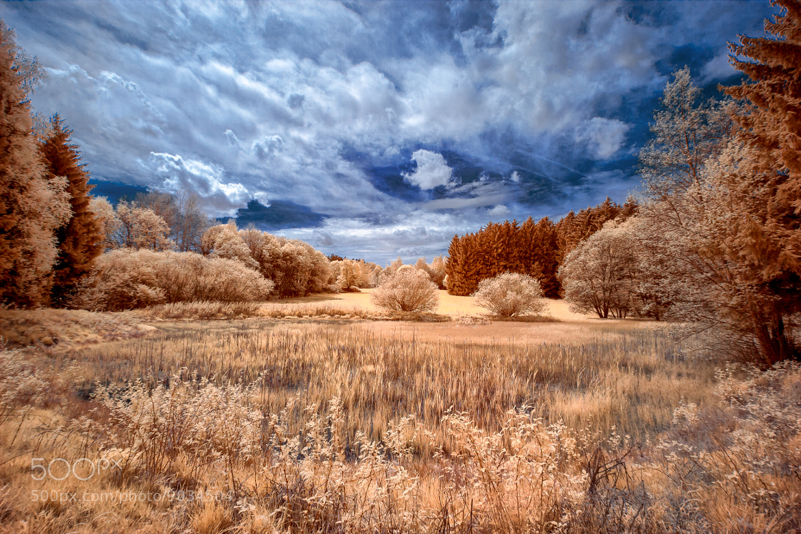 Photograph Painted in Infrared by Thorsten Scheel on 500px