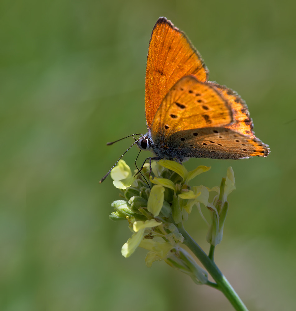 Photograph Butterfly 11 by Iman Mehr on 500px