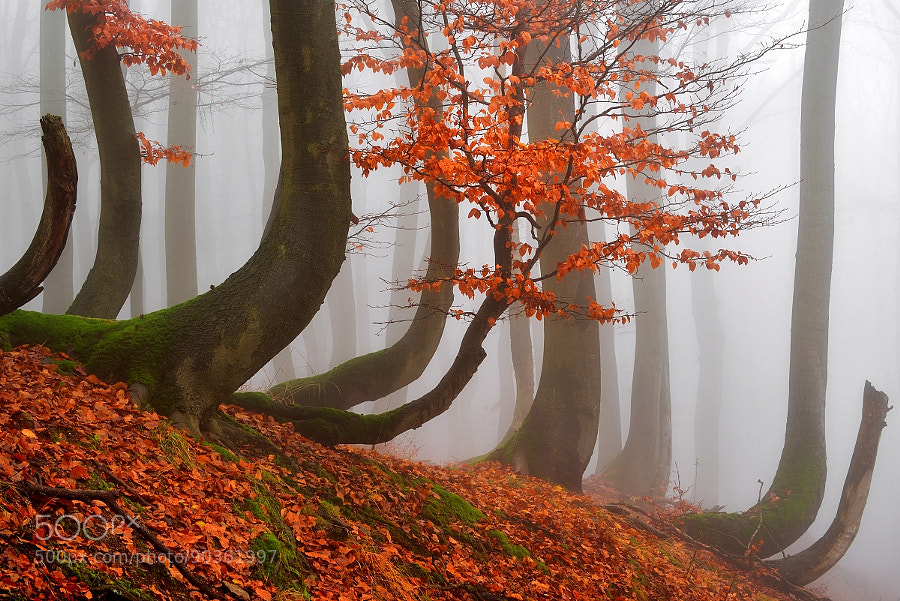 Photograph AUTUMN IN THE FOREST by TOMÁŠ MORKES on 500px
