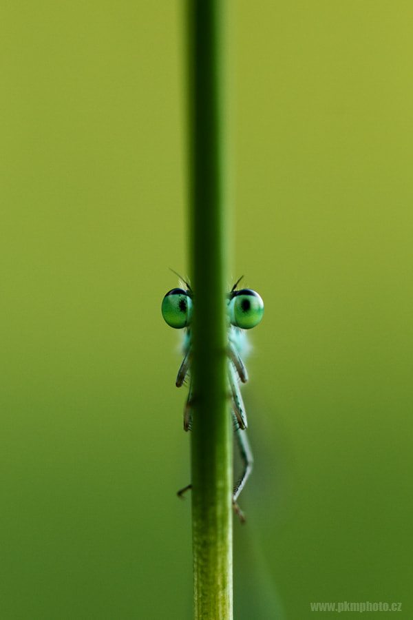 Photograph Watching you by Peter Krejzl on 500px