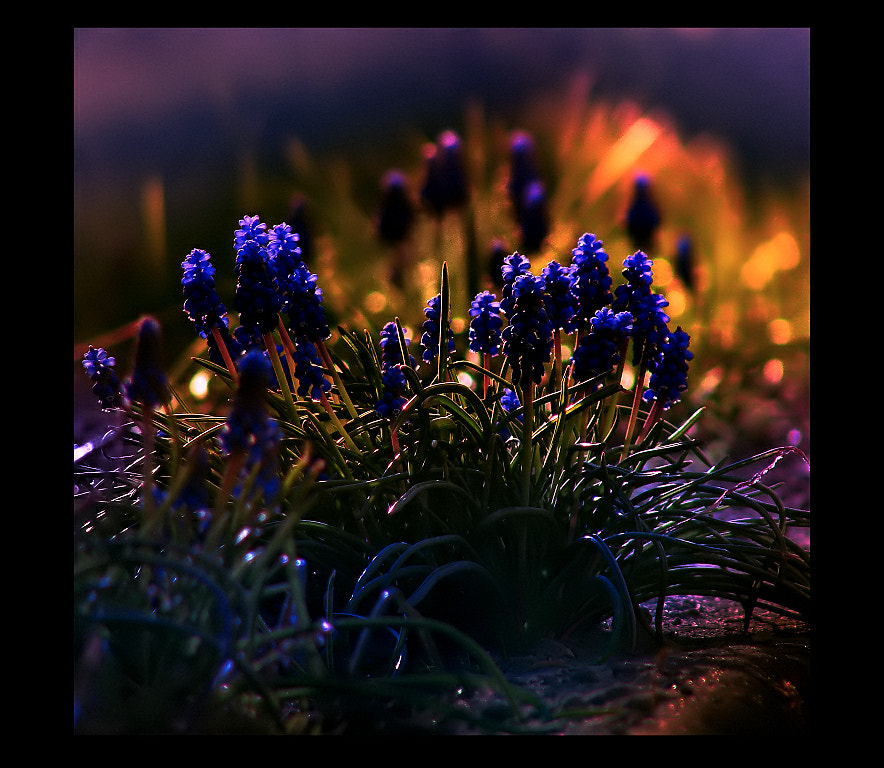 Photograph Sapphires II by EMERALD WAKE © on 500px