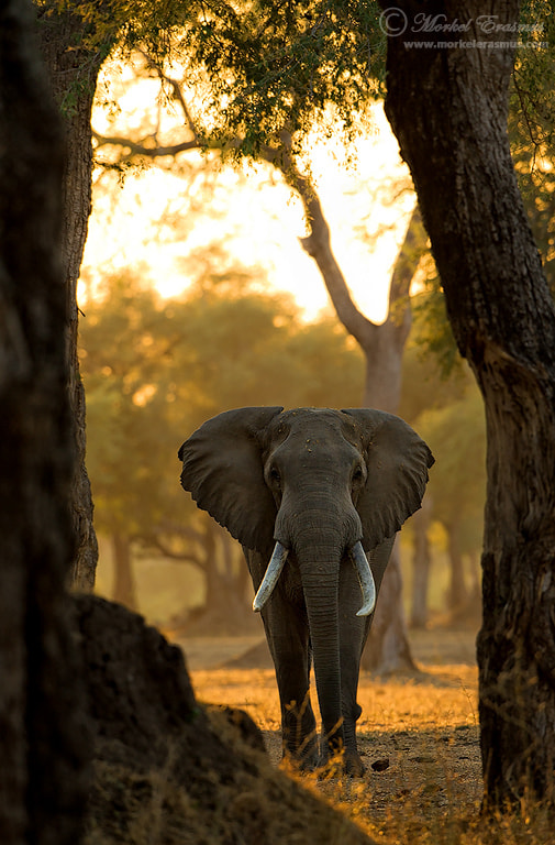 Photograph Through the Trees by Morkel Erasmus on 500px