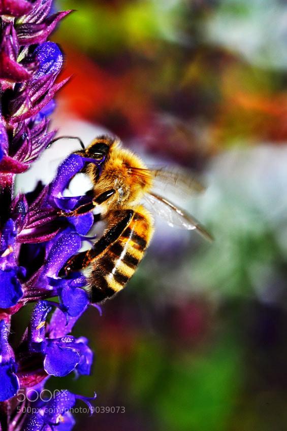 "Photograph ""Let It Bee"" by Kathrine Lorentzen on 500px"