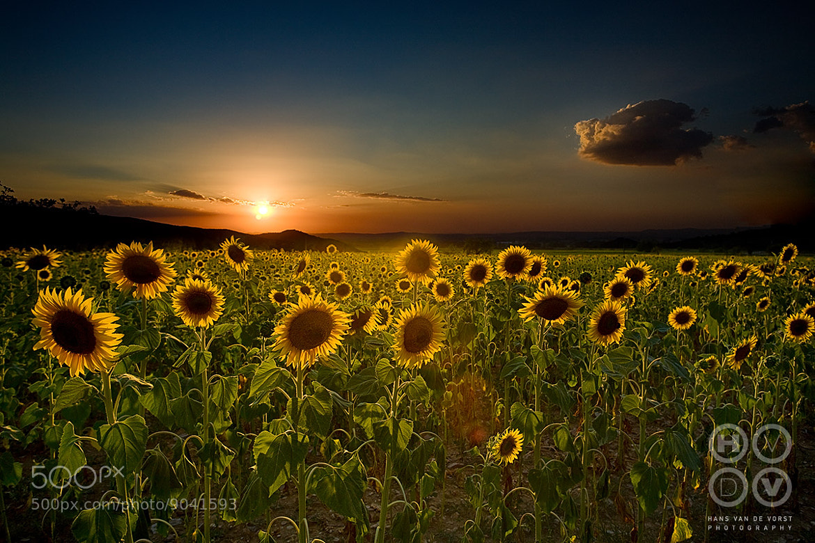 Photograph Sun by Hans van de Vorst on 500px