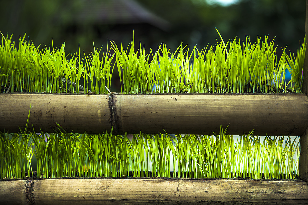 Photograph new lives by fook-seng liew on 500px