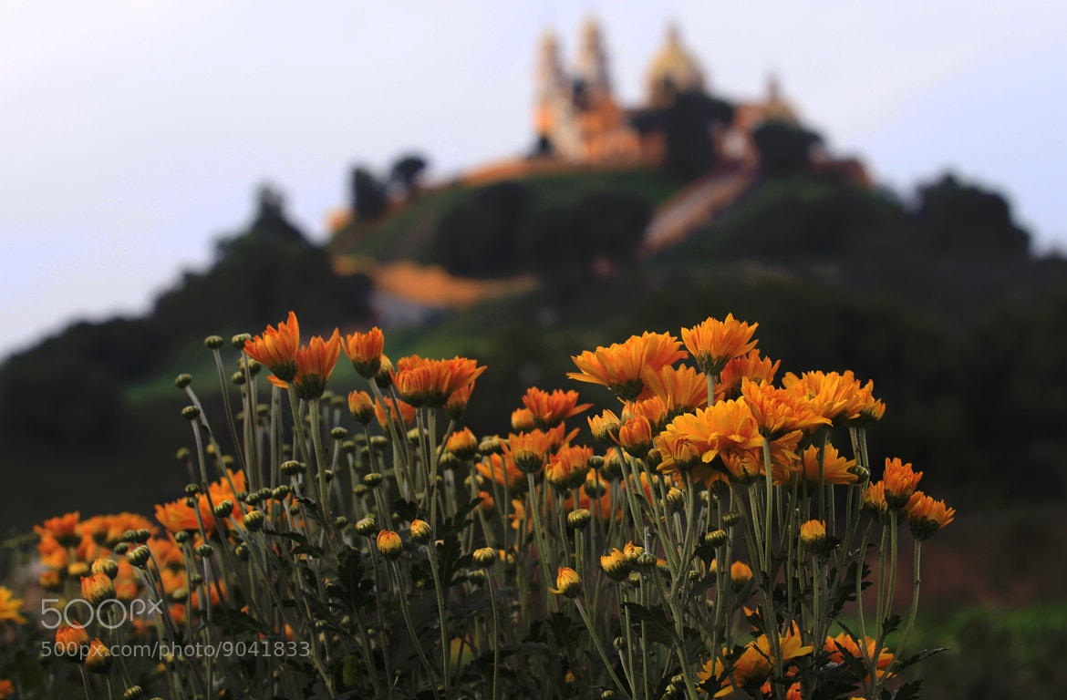 Photograph Flowers and church by Cristobal Garciaferro Rubio on 500px