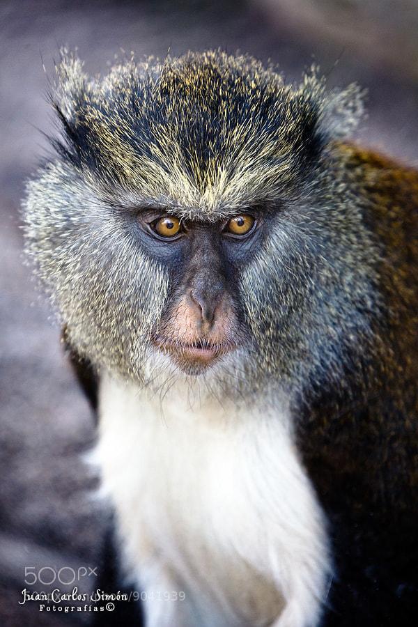 Photograph Casi Humana (almost human) by Juan Carlos Simón on 500px