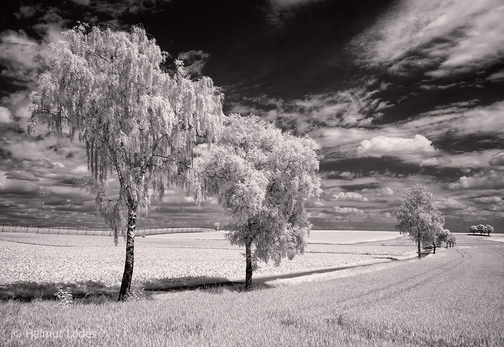 Photograph summertime by Helmut Lodes on 500px