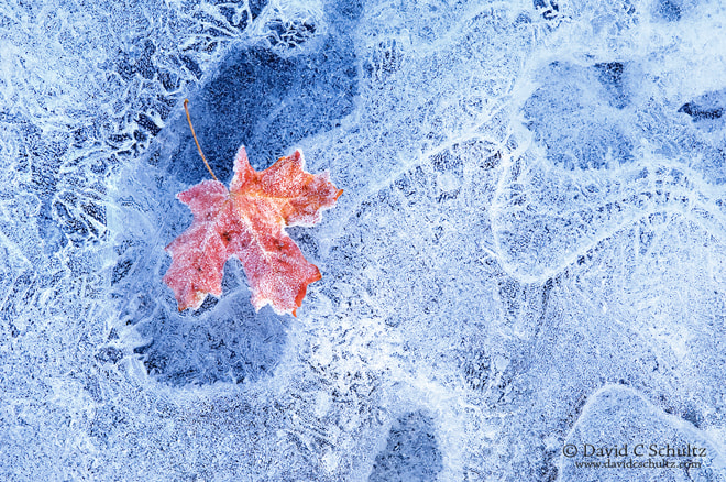 Photograph Leaf on Ice 1 by David C. Schultz on 500px
