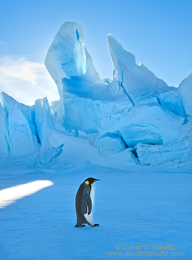 Photograph Ice and Emperor Penguin by David C. Schultz on 500px